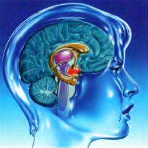 Мозг-эмоции